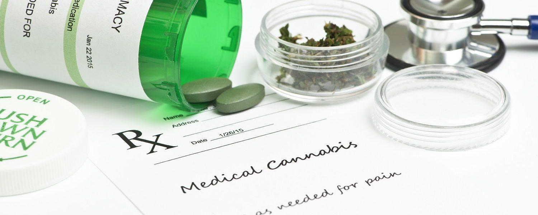 Vinte empresas têm interesse em cultivar maconha medicinal